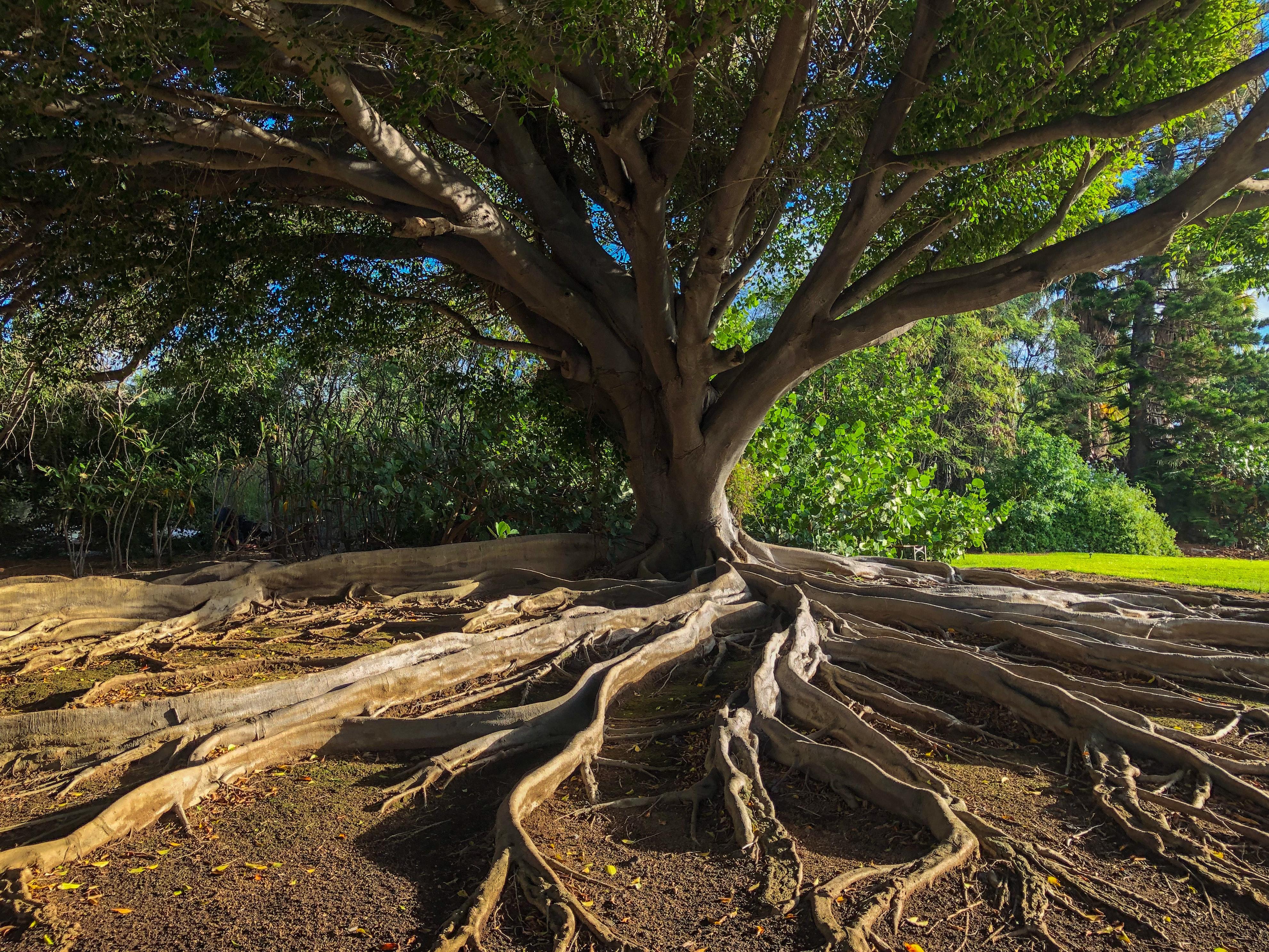 Kohti pitkäjänteistä, systemaattista ennakointia ekosysteemisessä yhteistyössä